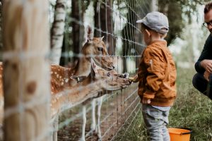 A touchpoint in the customer journey at a Zoo